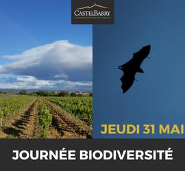 Evénement : Journée Biodiversité, des chauves-souris dans les vignes
