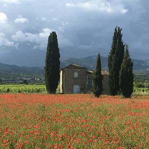 Le Mas des Songes: Qui n'a pas rêvé de posséder un jour des vignes ?