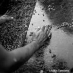 Vendanges castelbarry montpeyroux