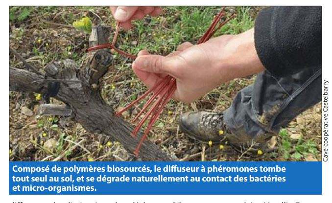 illustration confusion sexuelle article Paysan du midi Castelbarry montpeyroux